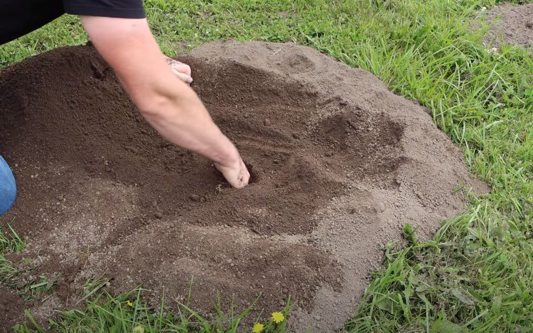 Mole mounds on the lawn